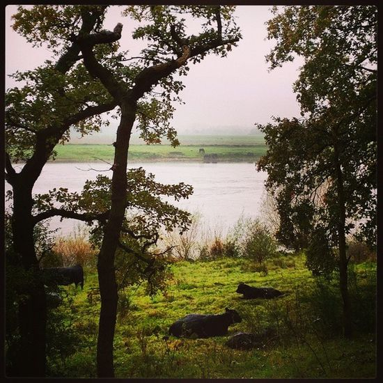 Brad Pitt Arcen Fall Maas Autumn walk nature Holland NL trails cows river horses Trees view