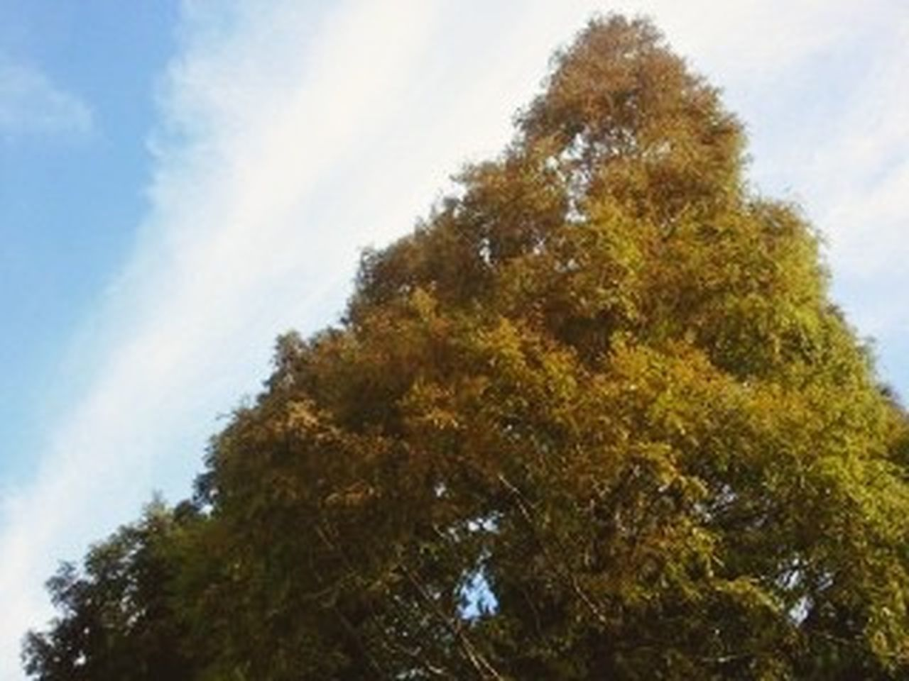 tree, nature, low angle view, sky, no people, day, growth, outdoors, forest, scenics, leaf, beauty in nature, freshness, close-up