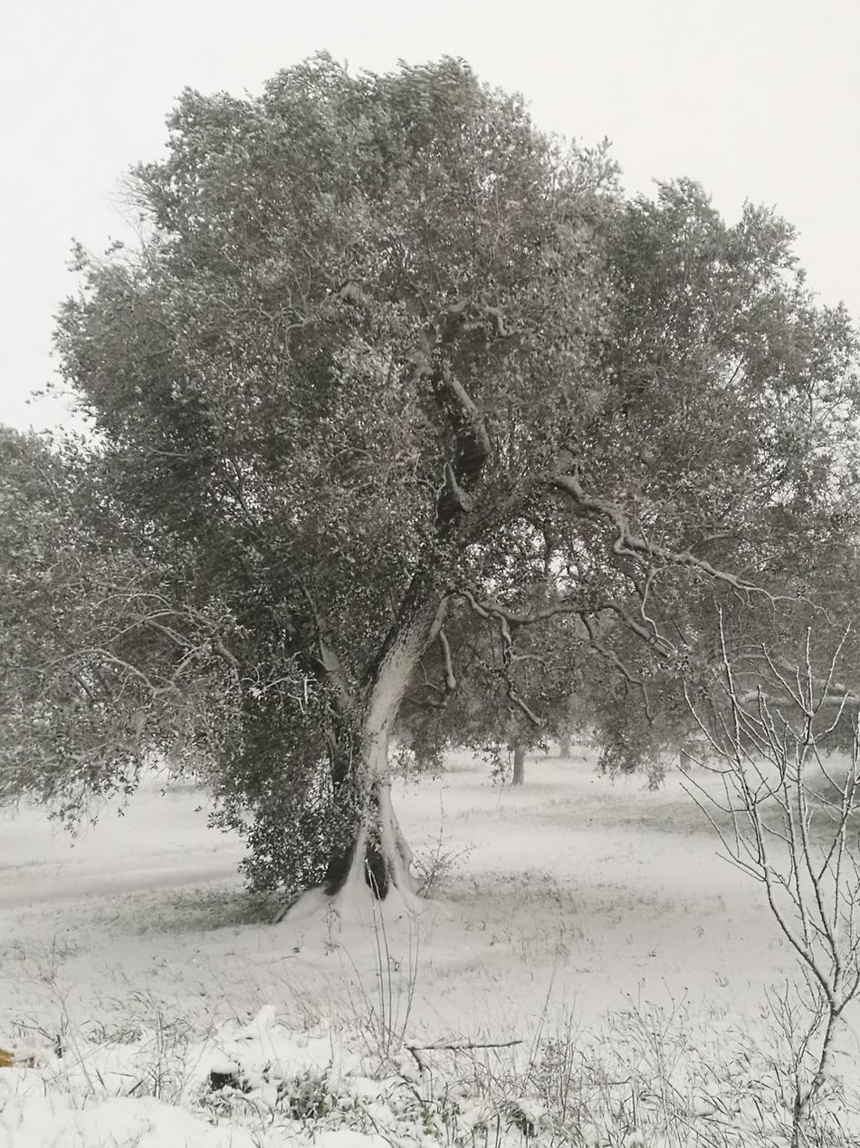 Day Outdoors Nature Winter No People Cold Temperature