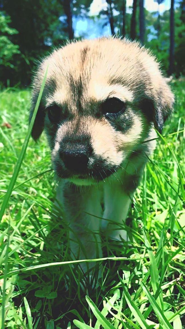 Lumberton,Tx Our newest pet Binky