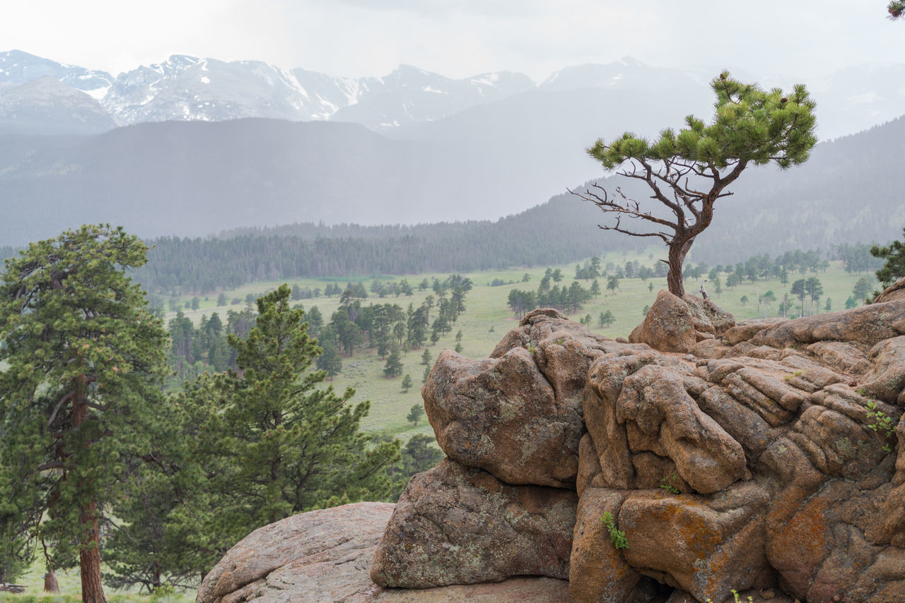 Beauty In Nature Day Landscape Mountain Mountain Range Natural Bonsai Nature No People Outdoors Rocky Mountain National Pa Rocky Mountains Rocky Mountains USA Scenics Sky Tranquility Tree