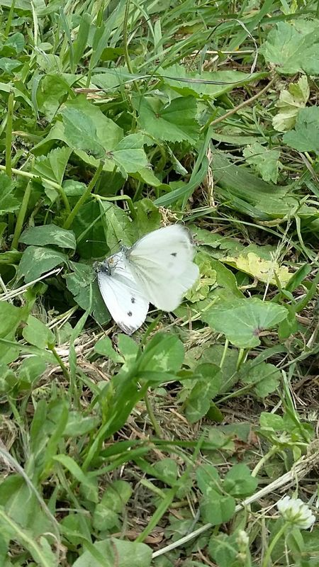 Parcodellevalli Daje No Filter, No Edit, Just Photography Nofilters 😚 ahahah Capture The Moment Original Farfalle Butterfly Collection Butterflies Butterfly presso Parco Delle Valli roma