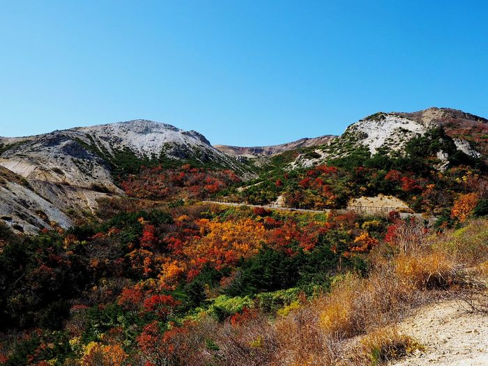 Autumn Leaves Beauty In Nature Autumn Leaves Is A Great Great Japanese Landscape Autumn Bloom Leaf Peeping Bandai Azuma Skyline Jyodo-daira Fukusima,japan