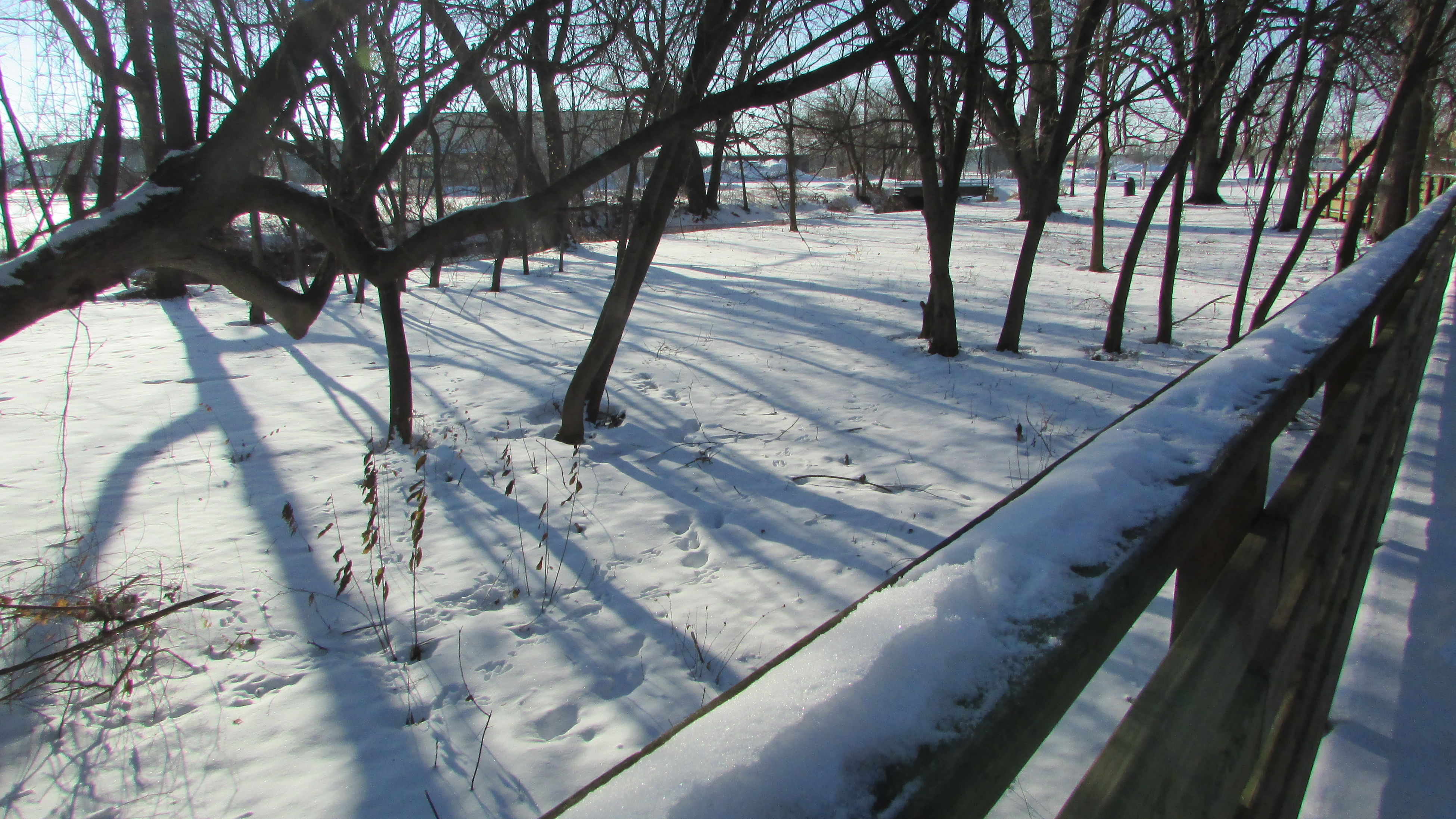 Wintery Walkway Sun And Shadow Alone Time No People Snow Day Tranquility Clam River Boardwalk Cadillac Michigan