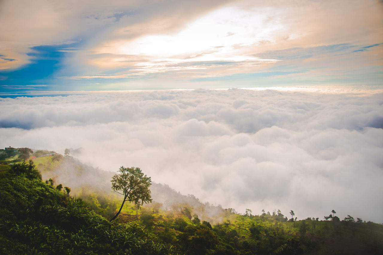 Foggy morning landscape in asia Beauty In Nature Cloud - Sky Day Focus On Foreground Foggy Foggy Morning Growth Landscape Nature No People Outdoors Scenics Sky Tranquil Scene Tranquility Tree