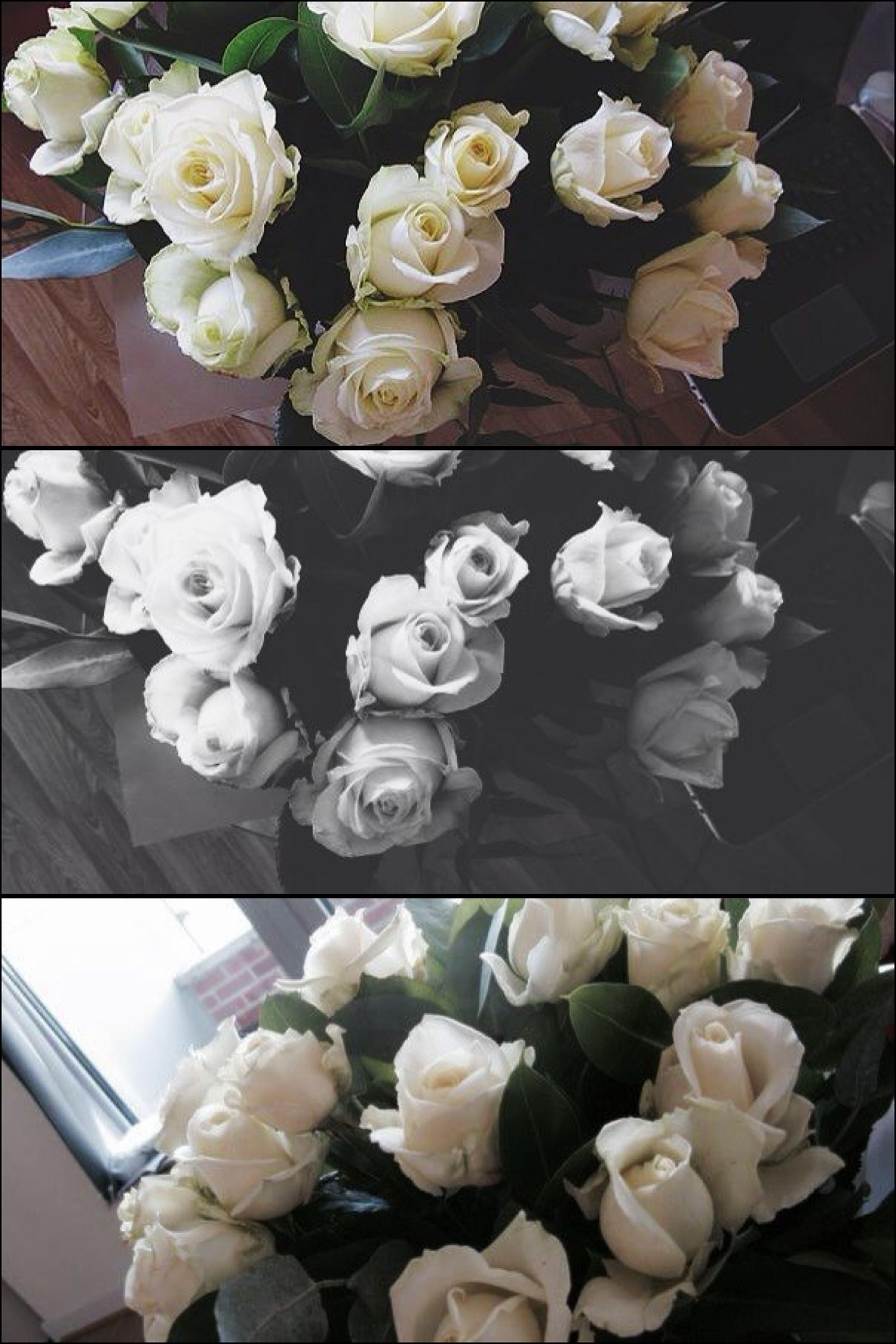 Flowers Eye4photography WhiteRoses EyeEmBestPics