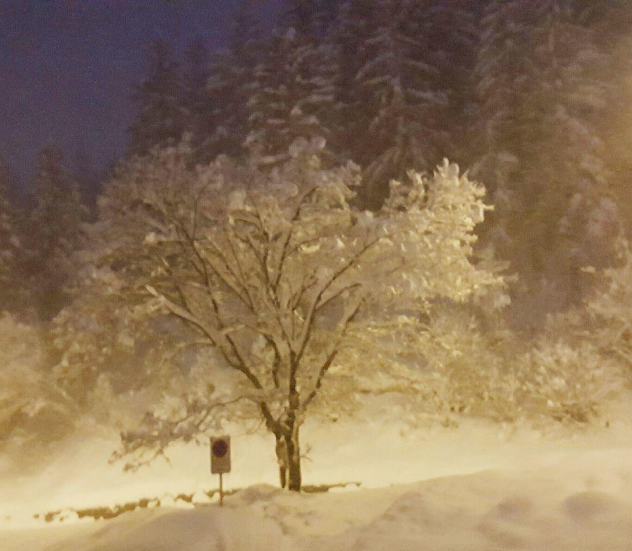 Tree Weather Winter