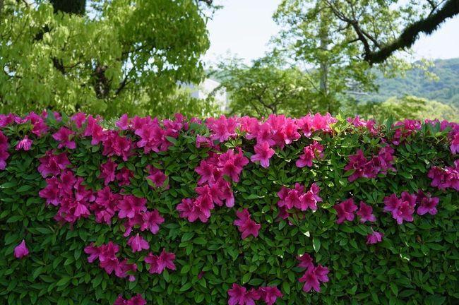 Spring Flowers Ricoh GXR Voigtländer Red Flower Color-skopar 25mm/f4
