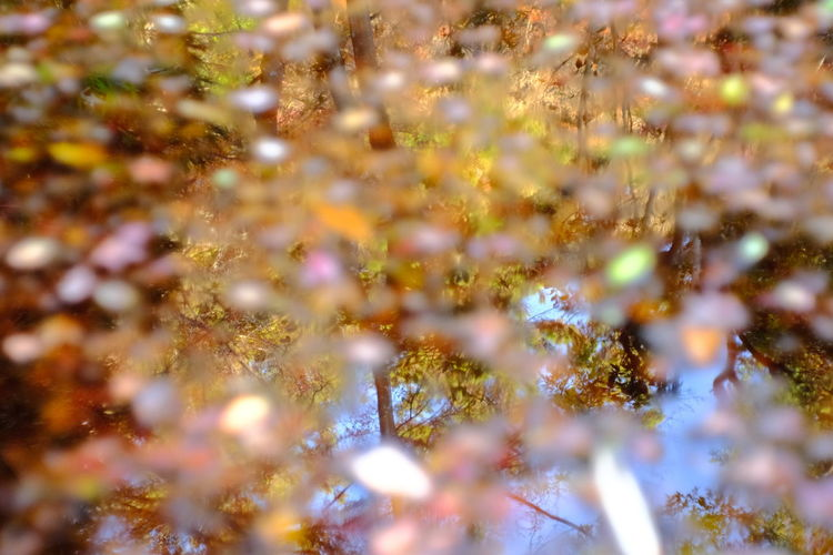 『15:34:14』 2016-12-02 Full Frame Backgrounds No People Close-up Defocused Nature Illuminated Beauty In Nature Christmas Water Outdoors Night Winter Yellow Beauty Hello Word Leaf Low Angle View Day Tree Nature Plant