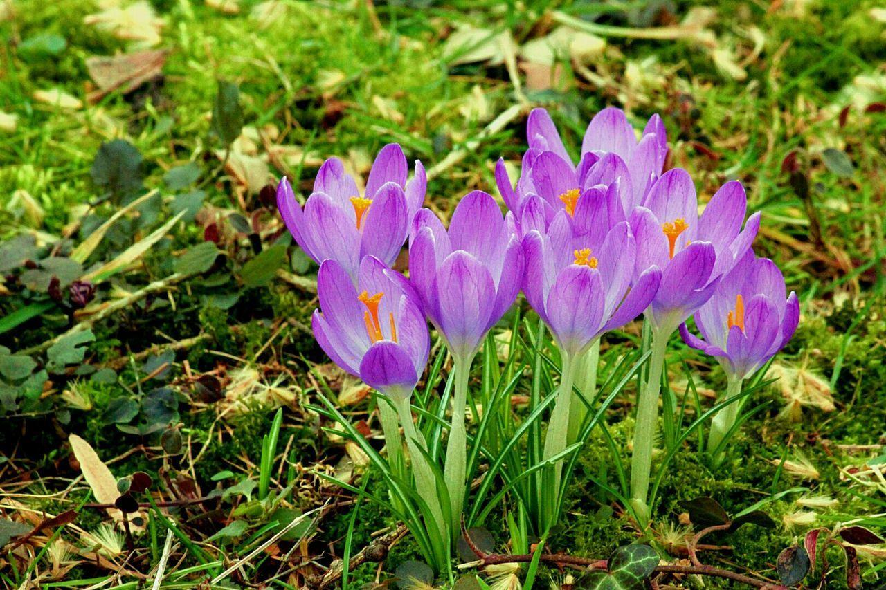 Frühlingsboten Frühling Spring Is Coming  Spring Flowers