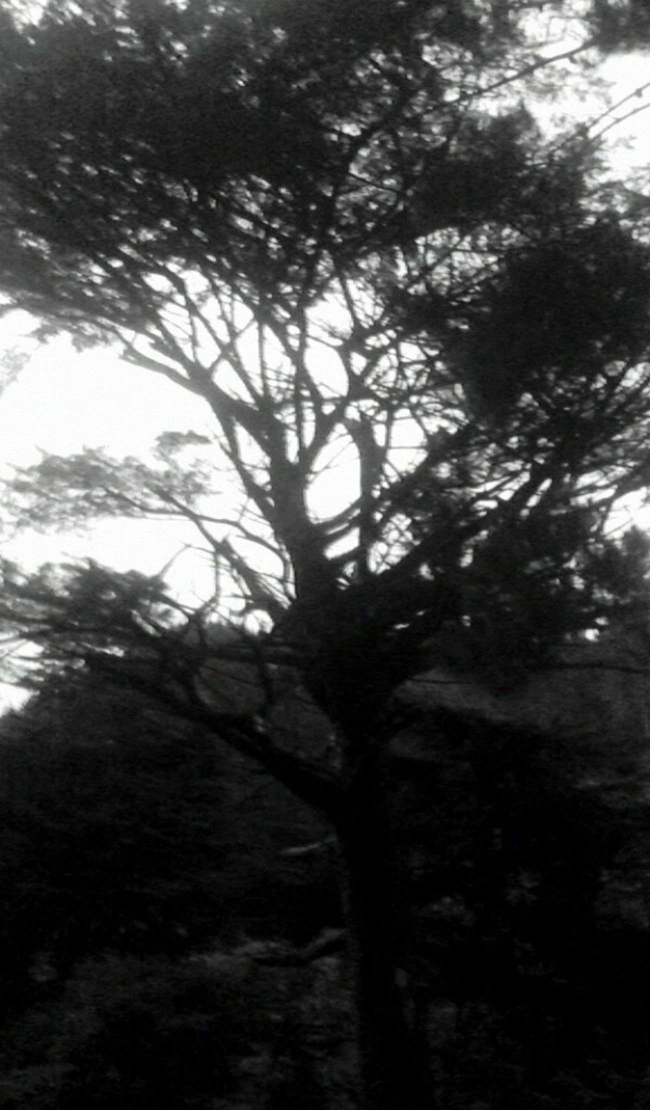 Hugging A Tree Silhouette Upper Hutt