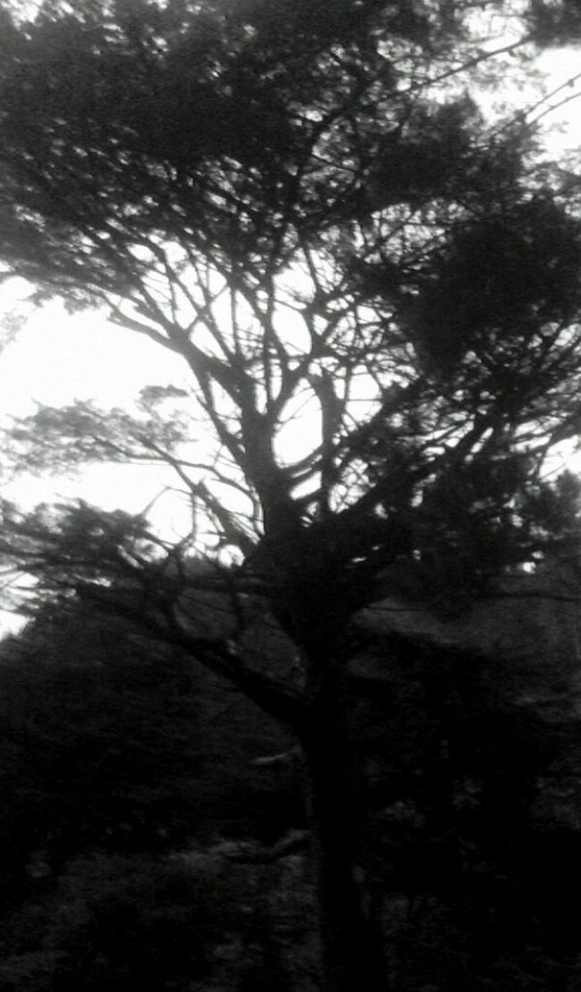 Hugging A Tree Silhouette Upper Hutt