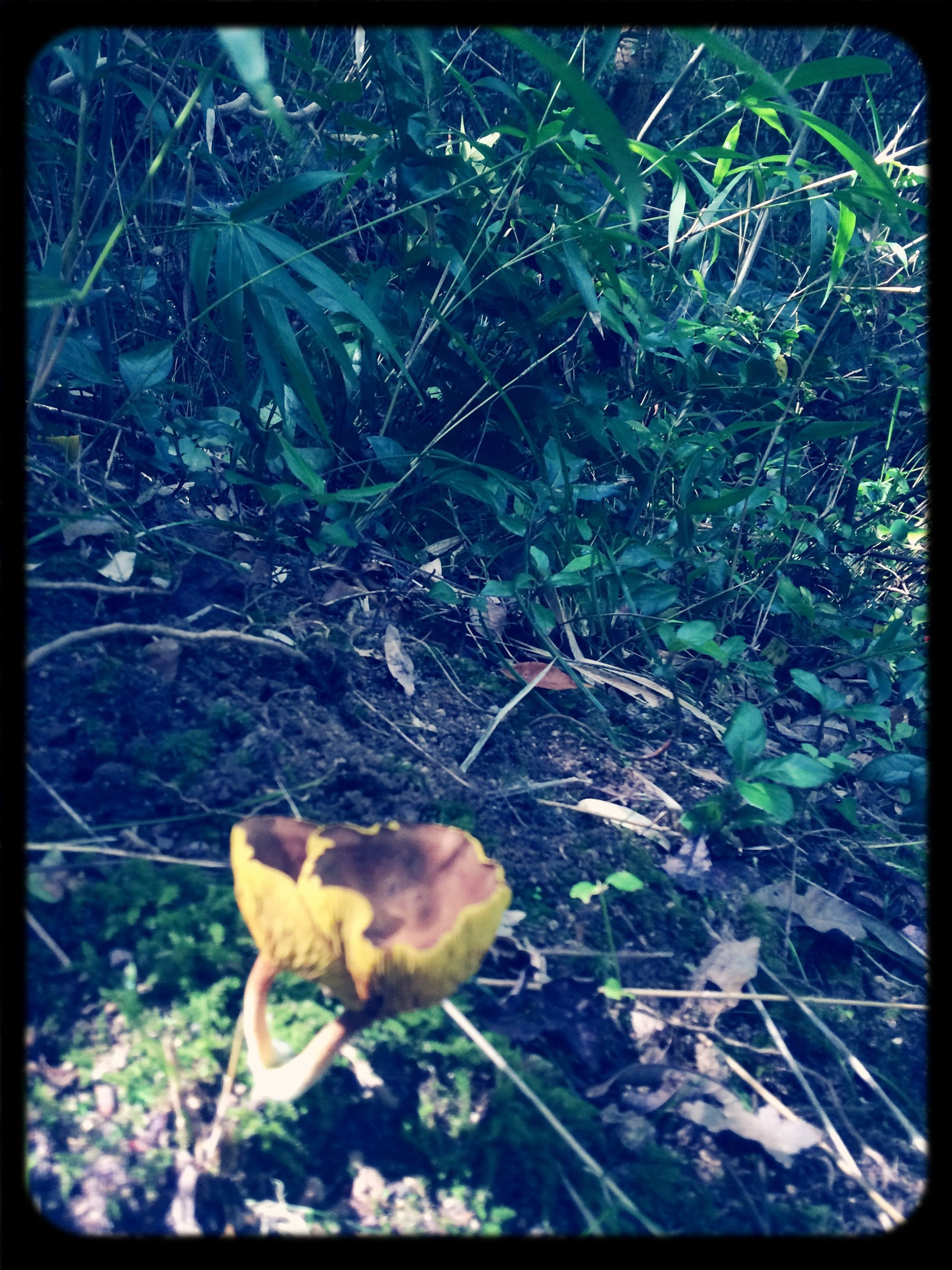 transfer print, auto post production filter, growth, plant, flower, fragility, nature, leaf, yellow, high angle view, close-up, freshness, beauty in nature, day, outdoors, no people, one animal, green color, animal themes, sunlight