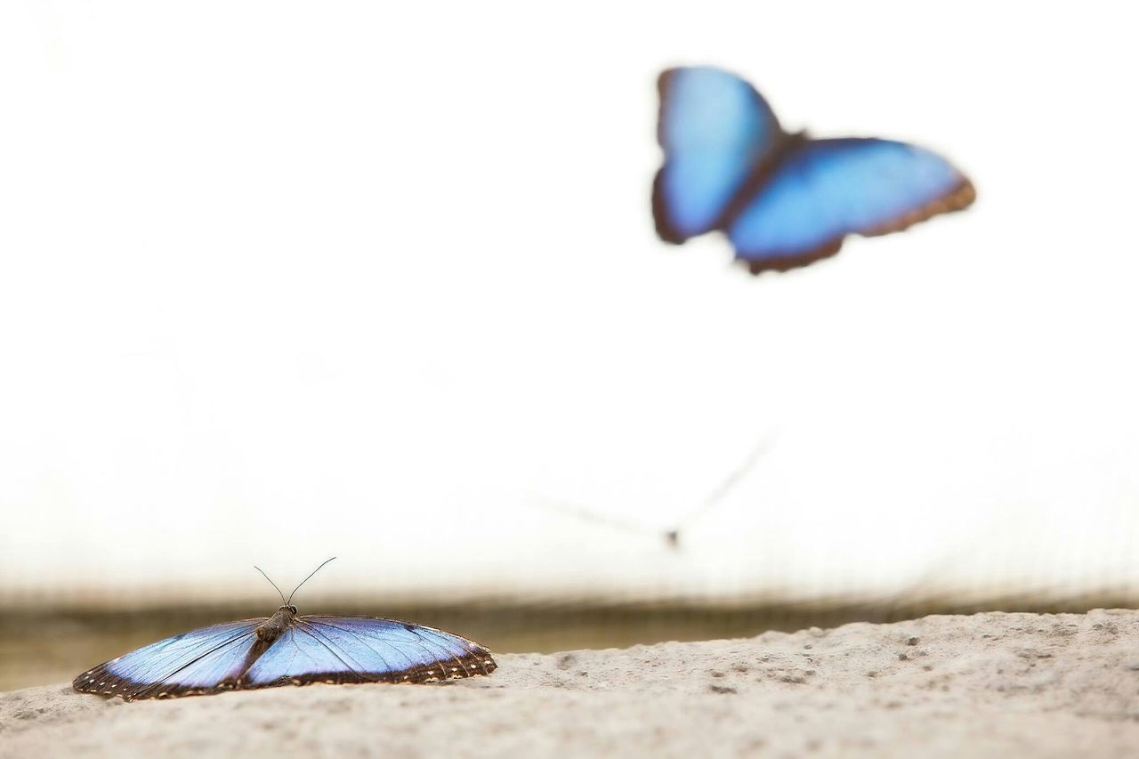 Beautiful stock photos of butterfly, Beauty In Nature, Blue, Butterfly, Clear Sky