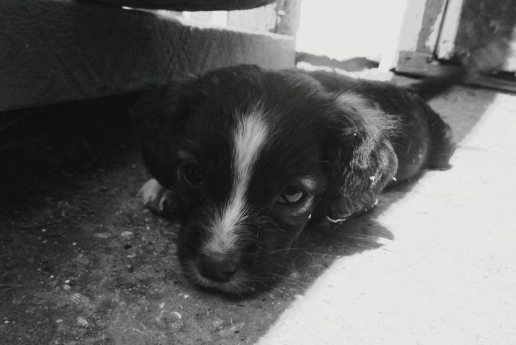 Reflection Rural Scene Sad Dog щеночек черно-белое грусть собака печаль