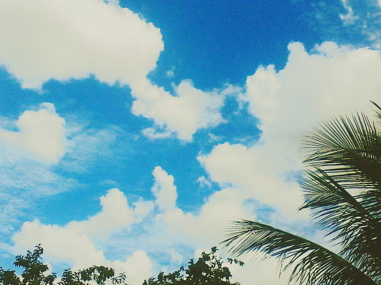Céu Sky Collection Ceudays Ceu Liindo! Skyline CeuAzul Sky And Trees Skyscrapers Ceumaravilhoso CeuPerfeito Skylovers