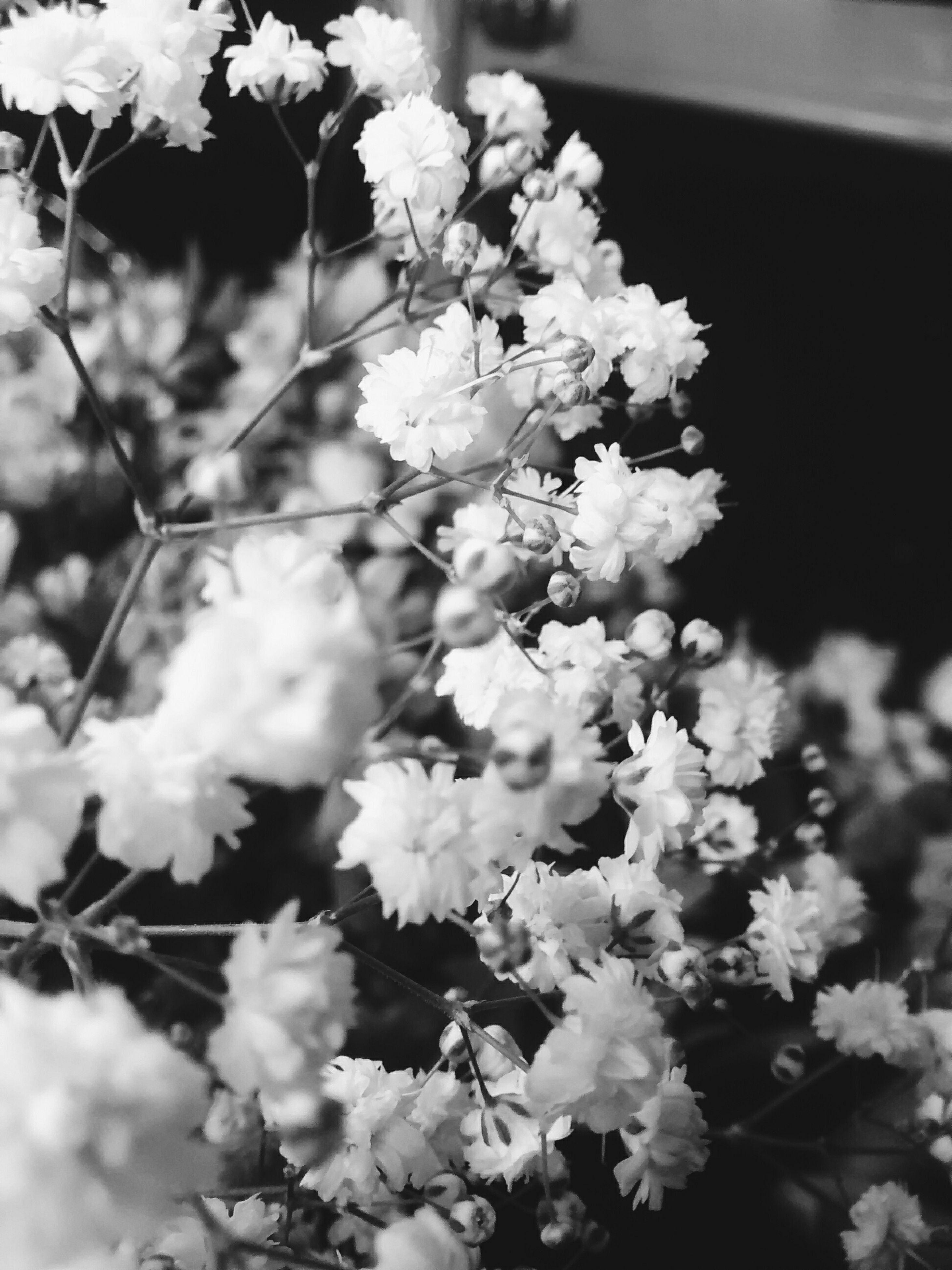 flower, freshness, growth, fragility, focus on foreground, beauty in nature, nature, petal, close-up, plant, blooming, branch, white color, blossom, outdoors, in bloom, day, tree, selective focus, no people