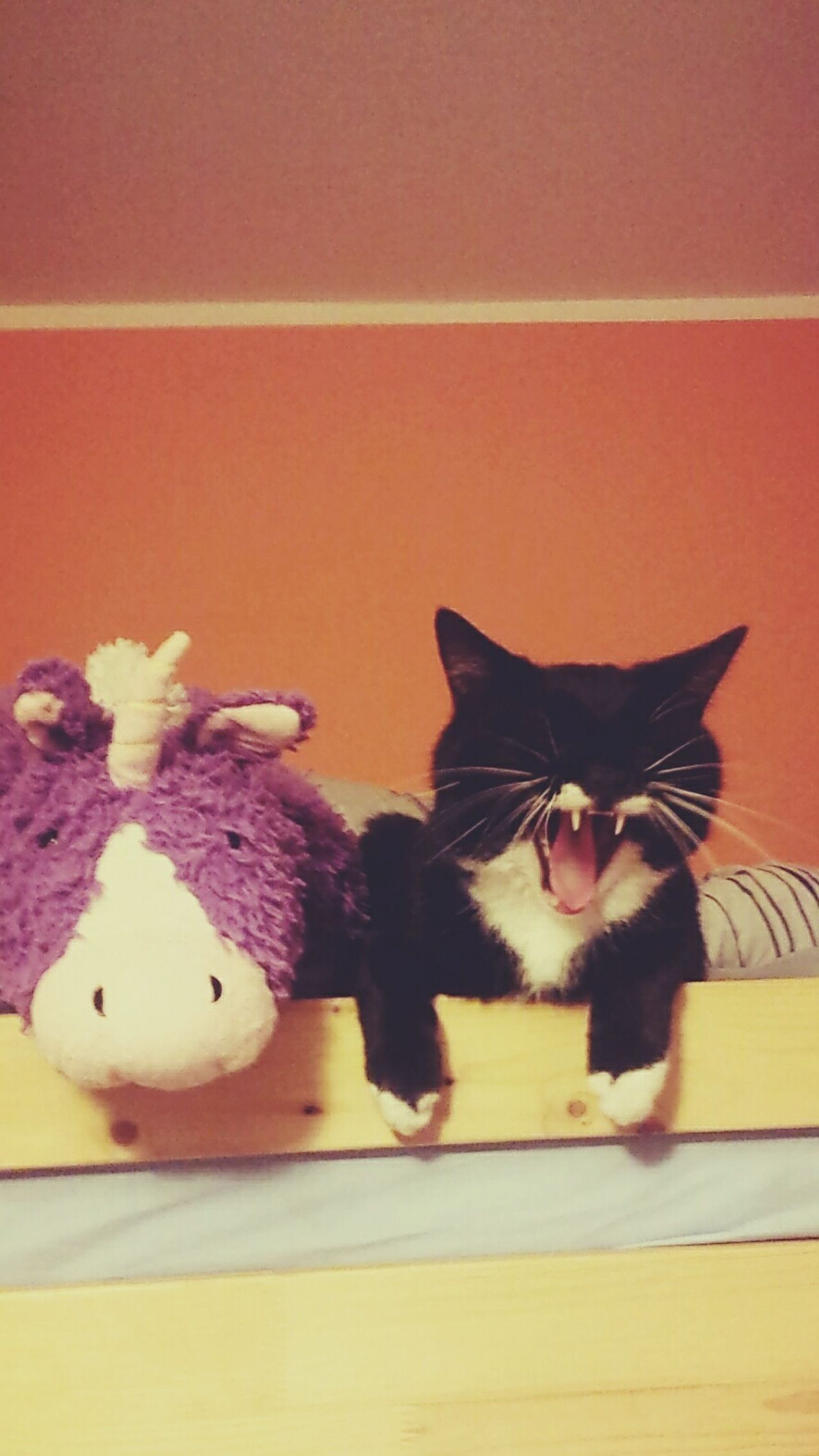 Ryszard's emotional Whenmomsaysno Cat Unicorn Pollowpet Yawning Emotional Justcanteven Nomore Cute Fangs Bestfriends Partnersincrime Cat Life Cry Out Roar Whiskers The Portraitist - The 2016 EyeEm Awards