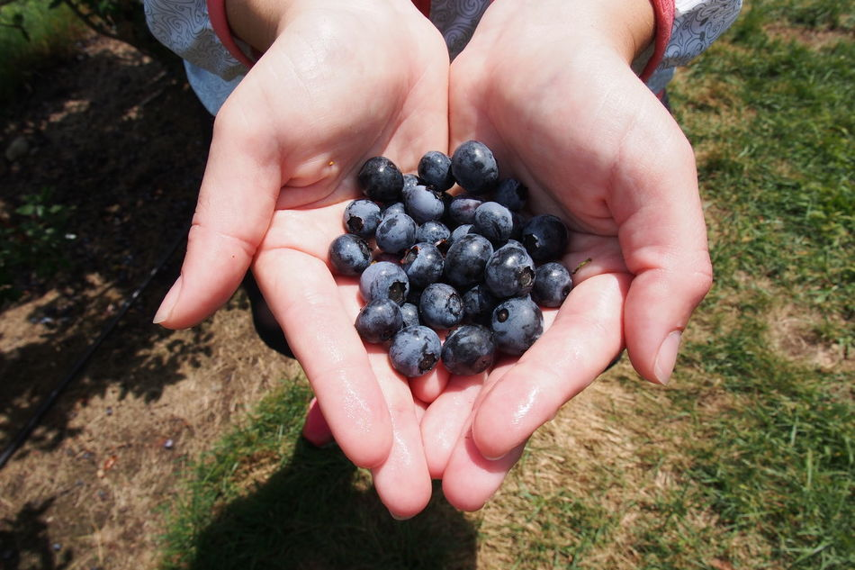 Beautiful stock photos of thanksgiving, Berry, Close-Up, Day, Fruit