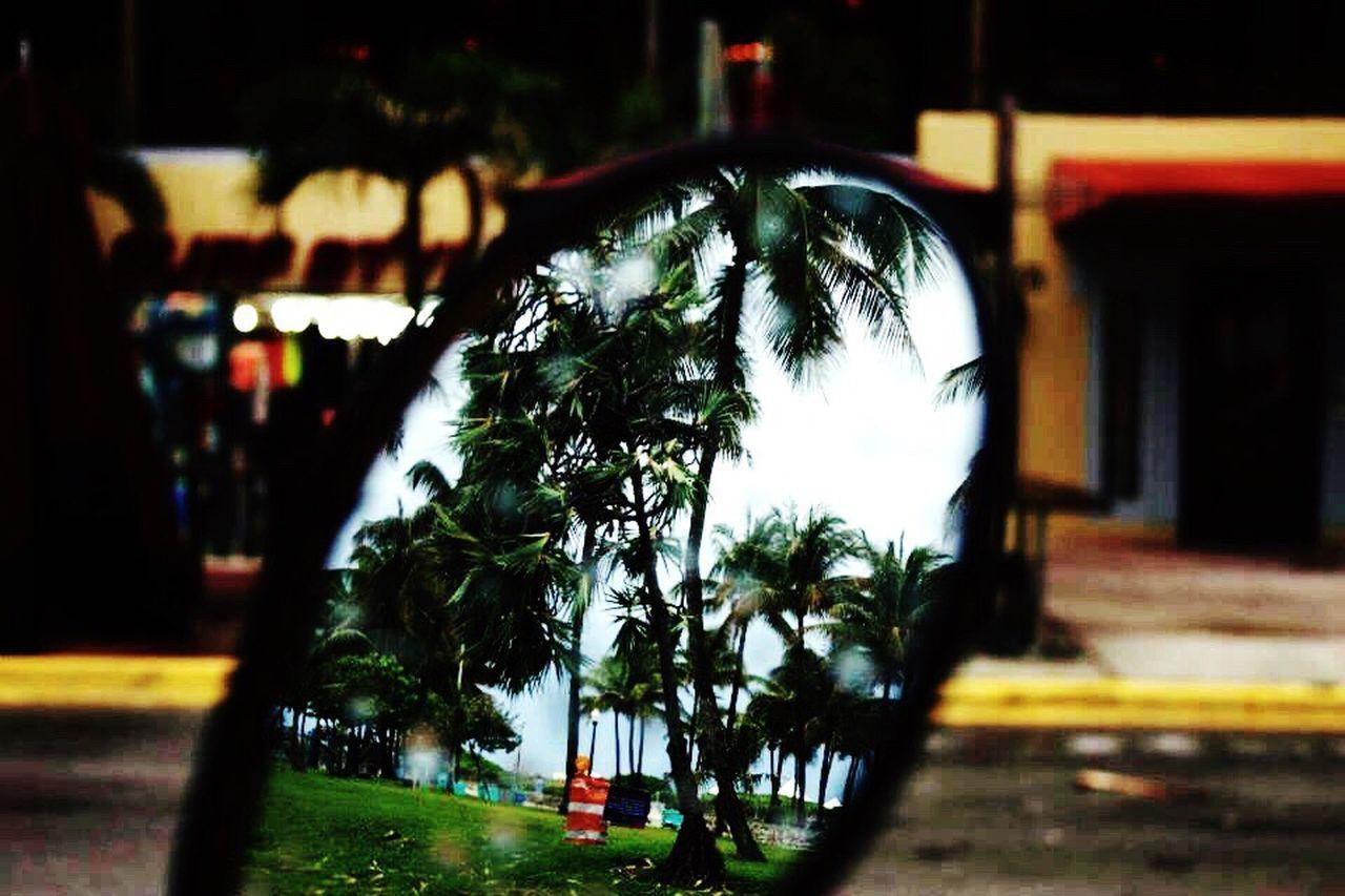 Miami Mode Of Transport Tree beach Beach Outdoors No People Water Rainy Days EyeEmNewHere