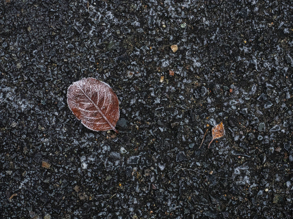 Frosty leave in the morning in Oslo Norway Asphalt Leaves Autumn Autumn Colors Autumn Colours Autumn Leaves City Leaves Day First Frost Frosty Leaves Frosty Morning Leaves🌿 No People Norway Oslo, Norway Outdoors Scandinavia