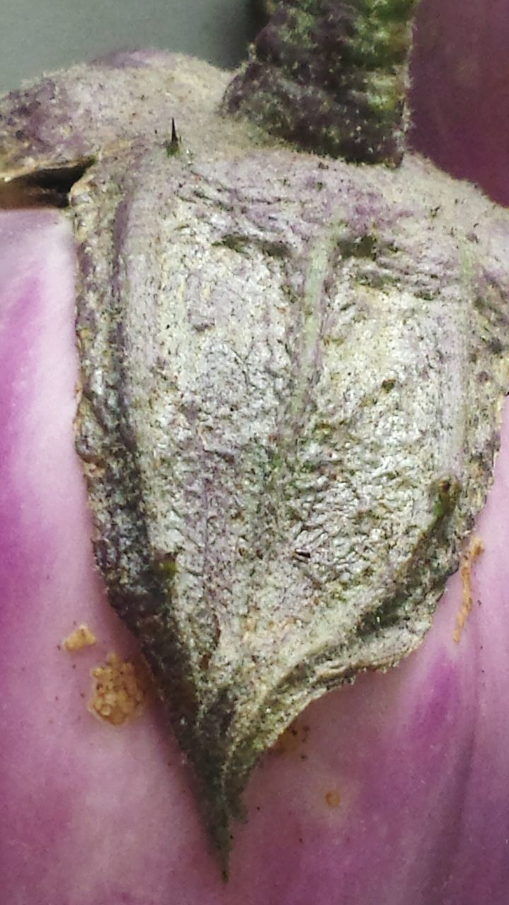 Close-Up Of Wet Eggplant