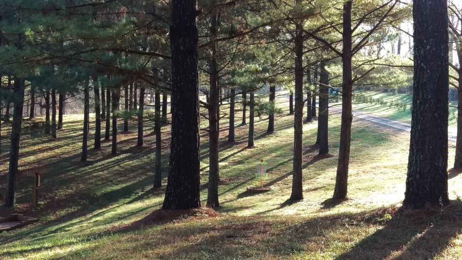 Rolling Pines Disc Golf Course Disc Golf Disc Golf Basket Discgolfholes Pine Trees