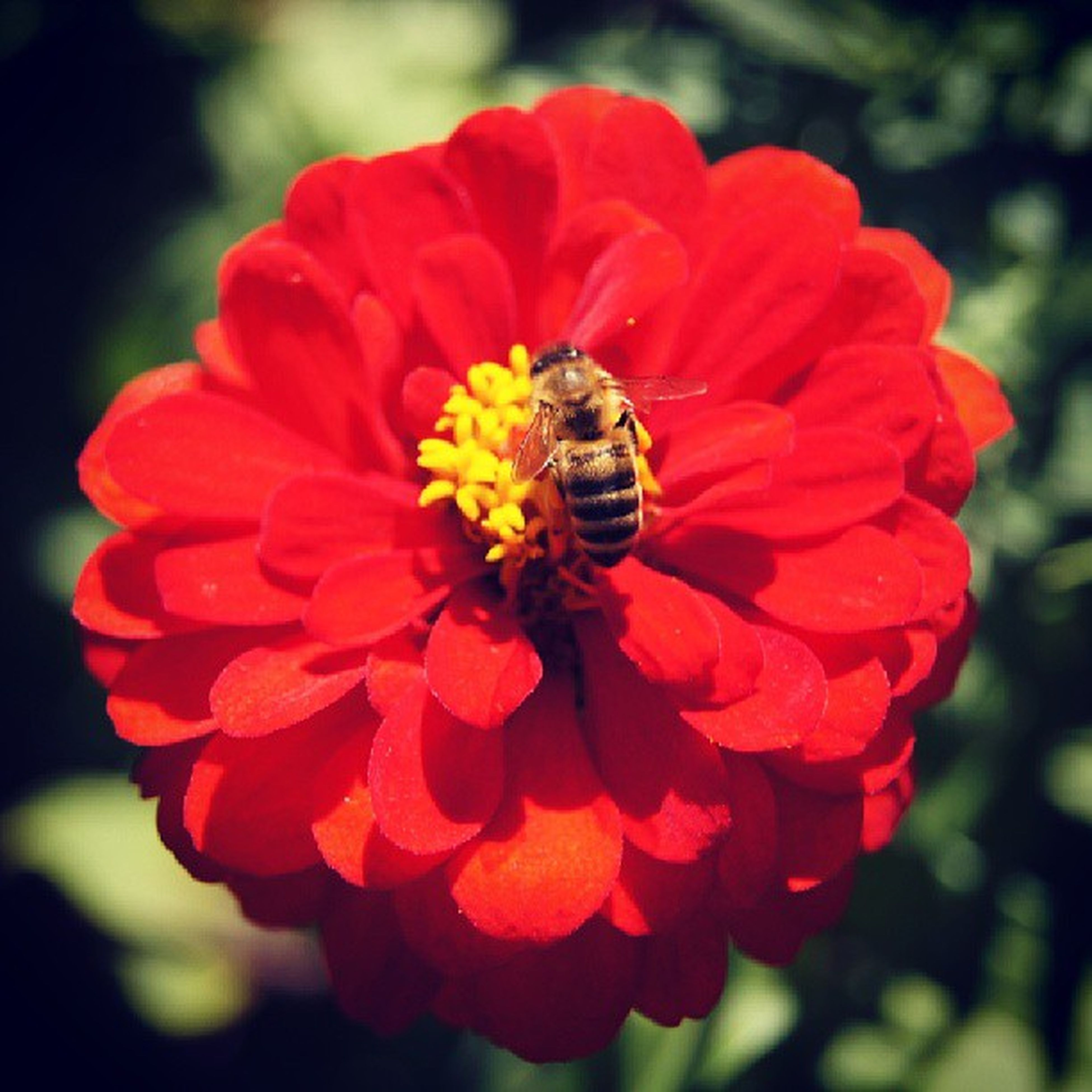 flower, petal, one animal, animal themes, animals in the wild, flower head, insect, wildlife, freshness, fragility, close-up, beauty in nature, focus on foreground, growth, single flower, nature, red, pollination, blooming, plant