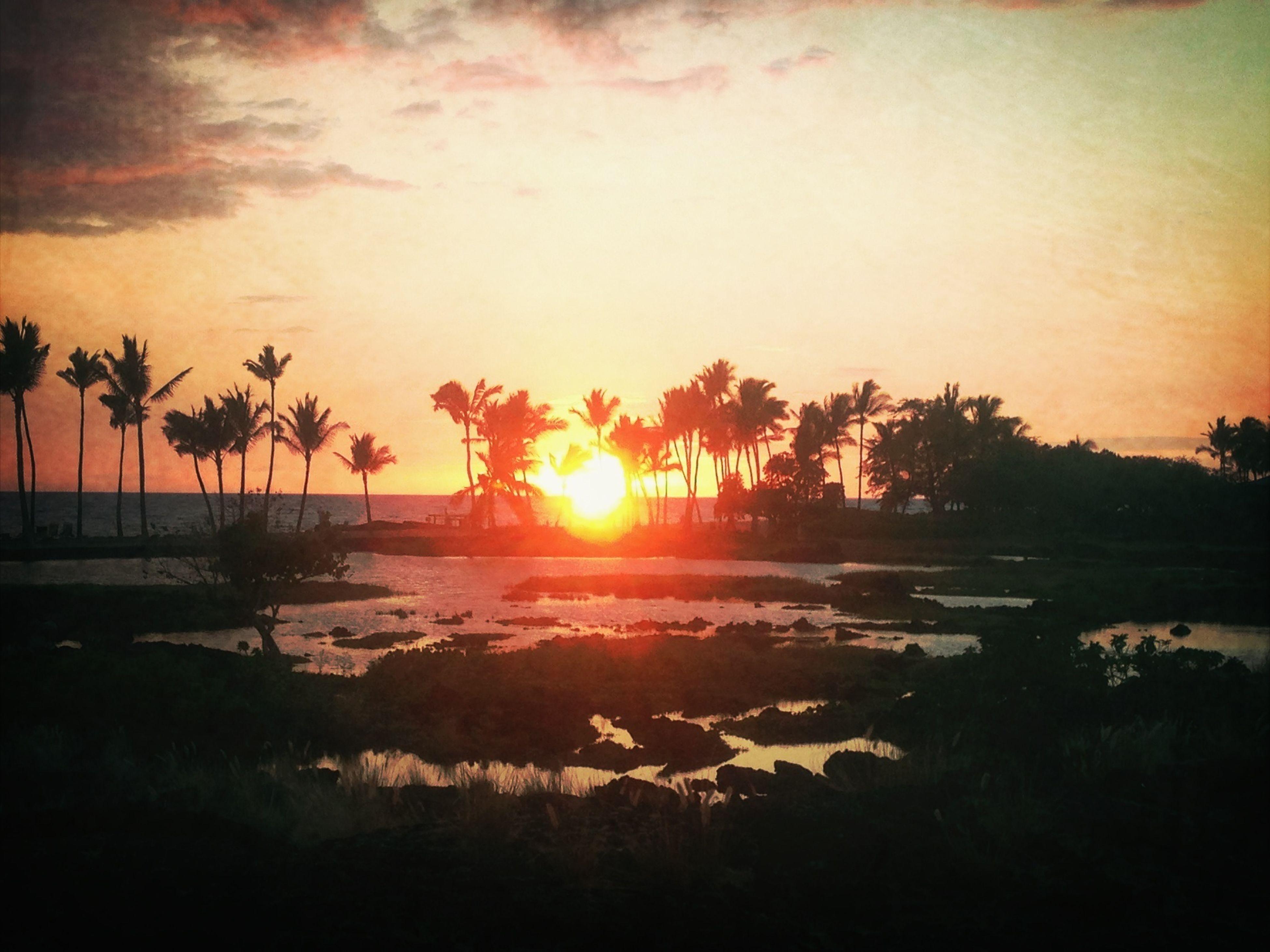 sunset, sun, water, tranquil scene, scenics, tranquility, beauty in nature, sea, orange color, beach, tree, sky, nature, idyllic, reflection, silhouette, sunlight, shore, palm tree, sunbeam