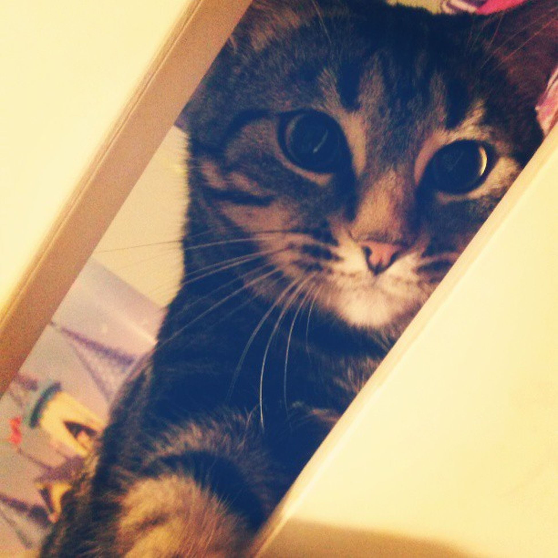 Cat model. Kitties Cats Animals Waldeneffect tabbycat