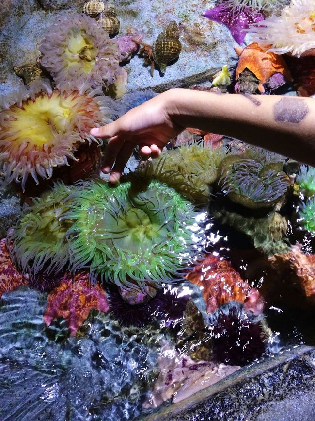 Taking Photos Hello World Relaxing Enjoying Life Tranquility Glowing Color Palette Natural Pattern From My Point Of View EyeEm Nature Lover Exceptional Photographs Colour Of Life Beauty In Nature Sea Life Underwater Aquarium Shootermag Ocean Oceanlife Underwater World