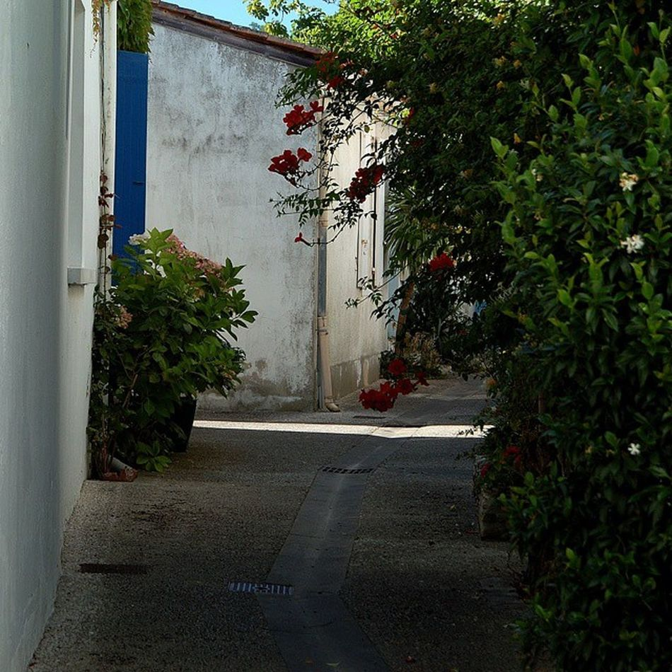 Jardin secret Saintrojanlesbains Ruelle Charantemaritime Oleron