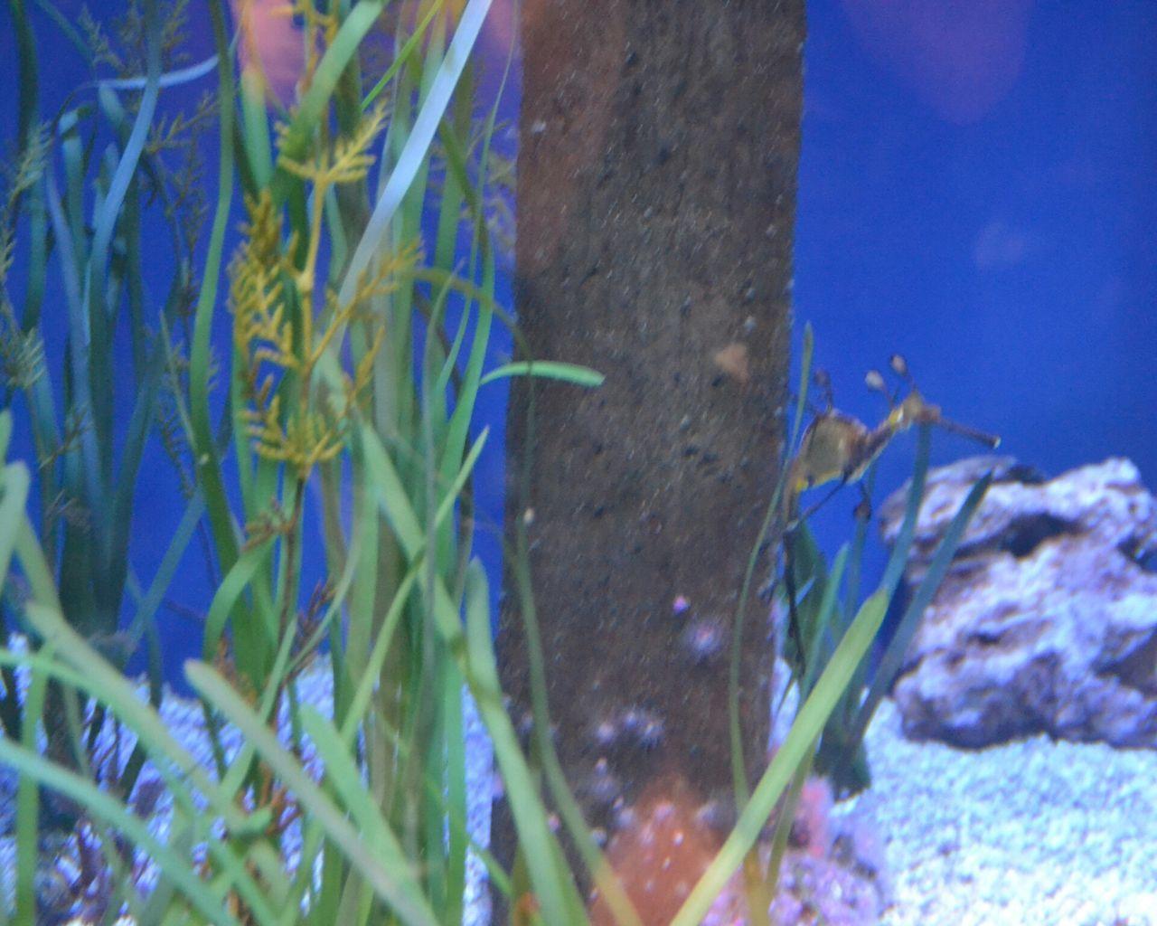 Sea Dragon Multi Colored No People Animal Themes Aquarium Underwater Oceanographic Aquarium Photography Animal Animals In Captivity Indoors