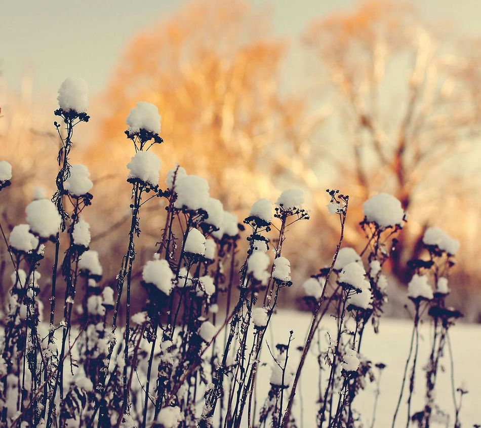 Hello World Cold Winter ❄⛄ Winter ❤Waouw❤