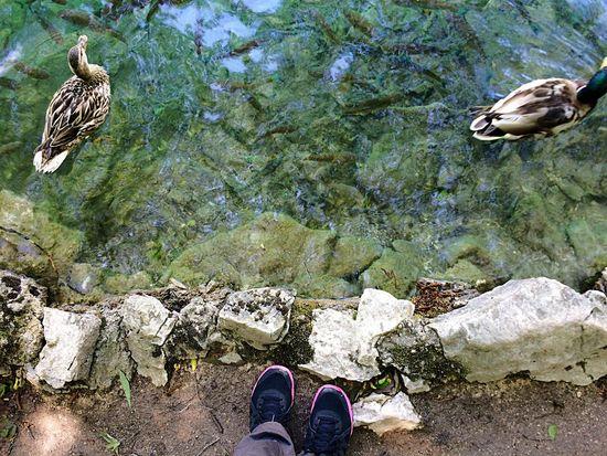 Nature Plitvice National Park Beauty In Nature Landscape_Collection Duck Ducks Capture The Moment