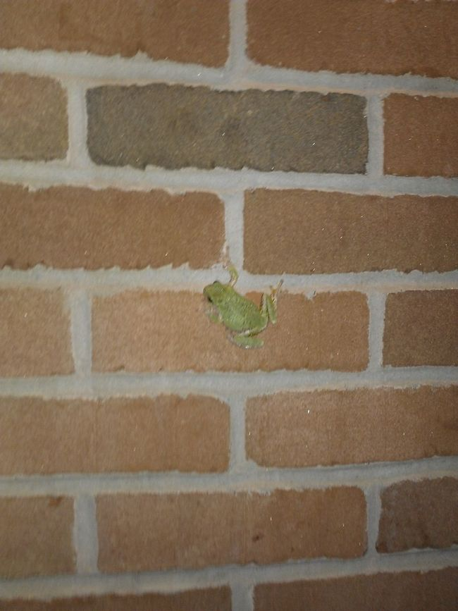 Theres A Muthaflippin Frog On My House