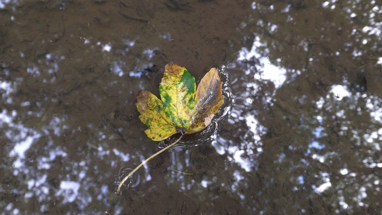 Leaf in the puddle Leaf Puddle Water Reflection Nature Fallen Leaves Outdoors Blatt Pfütze Summer Natur