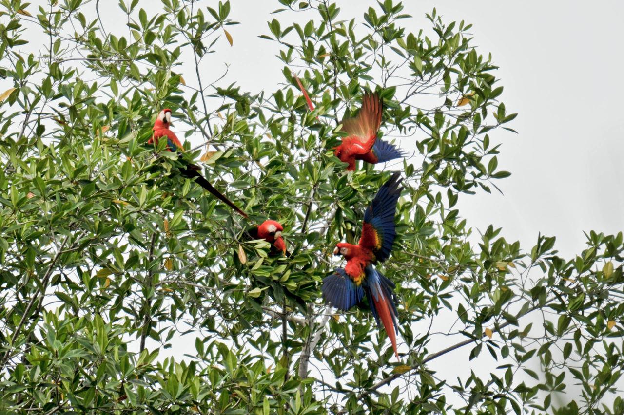 Beautiful stock photos of parrot, , Animal, Bird, Environment