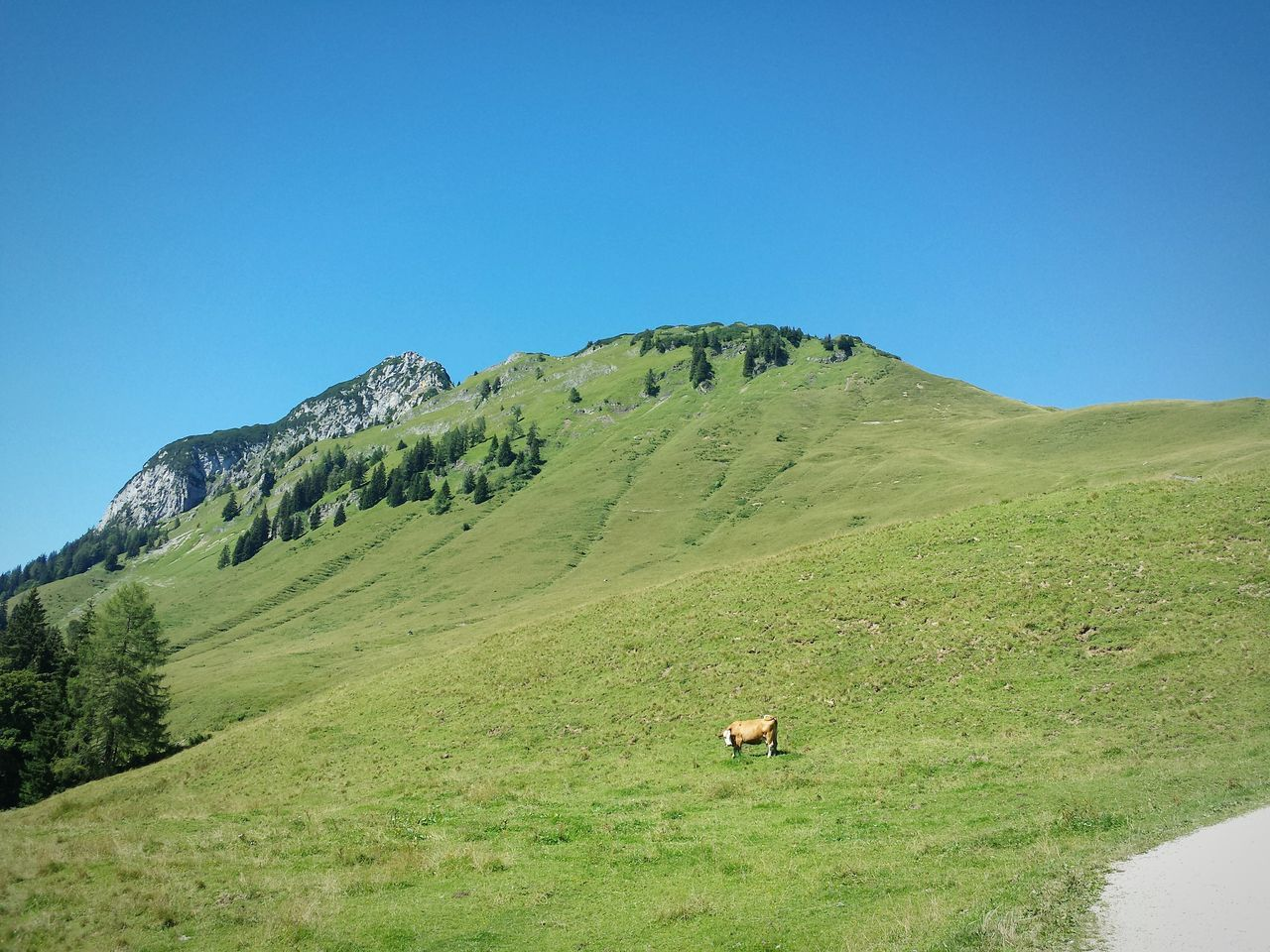 Nature Landscape Green Color Mountain Outdoors Day Vacations Scenics Travel Destinations No People Grass Sky Beauty In Nature Tree Clear Sky Hiking Animals In The Wild Cow Green Blue Sky