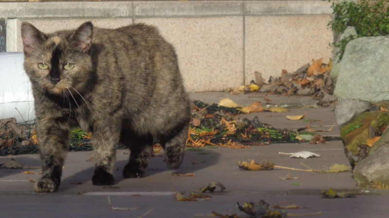 Bibi Pet Portraits Gato😽 Kedi Domestic Cat One Animal My Lovely Cat Cat