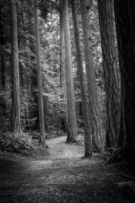 blackandwhite in Bellingham by SHINEPHOTO