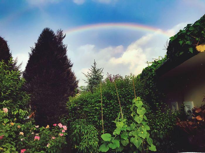 Rainbow Nature Istanbul