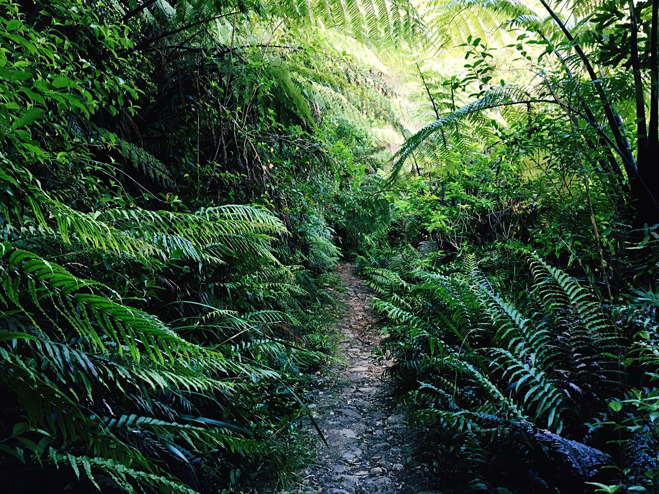 Nature Forest Tree Lush Foliage Green Color Beauty In Nature Outdoors No People Lush - Description Day
