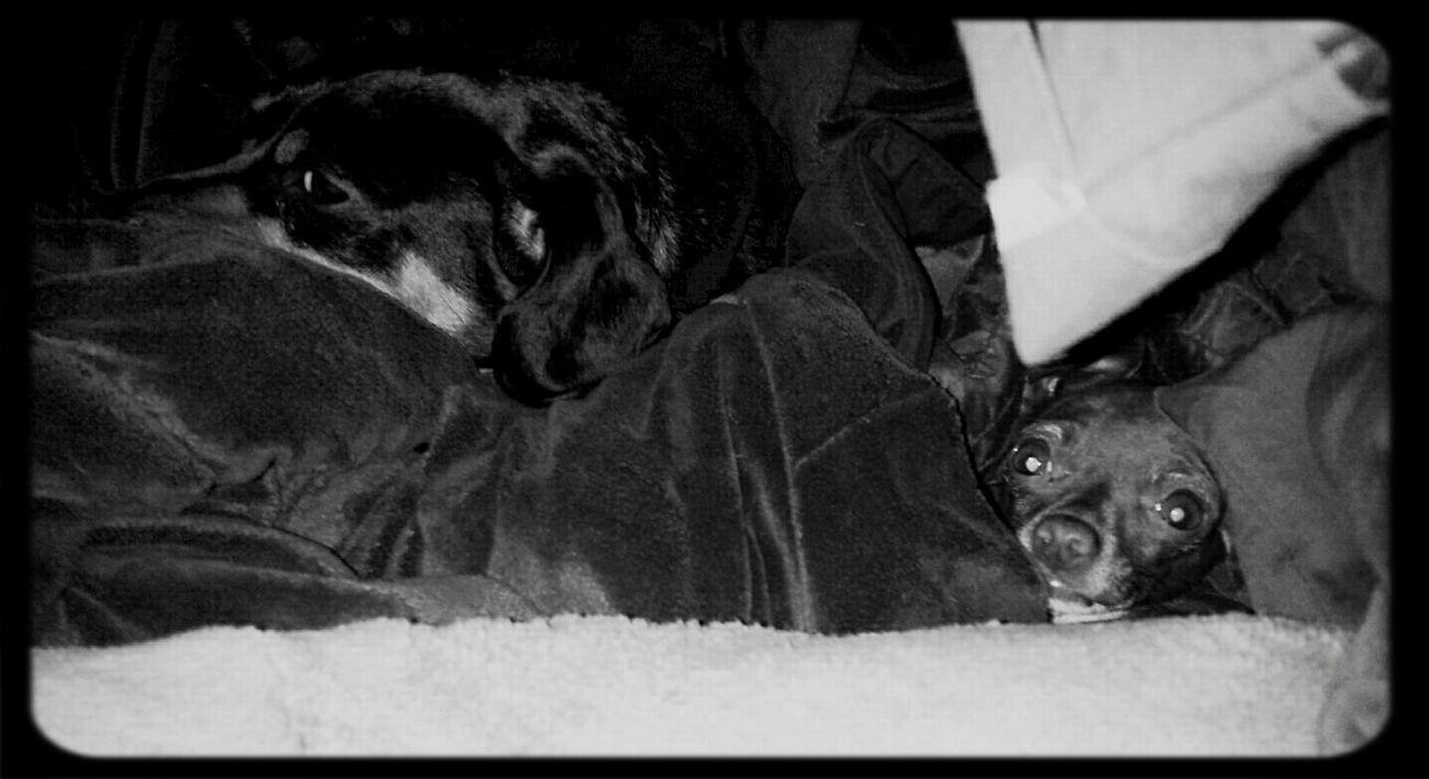 My Dog Is Cooler Than Your Kids Black & White Wonhglück Enjoying Life