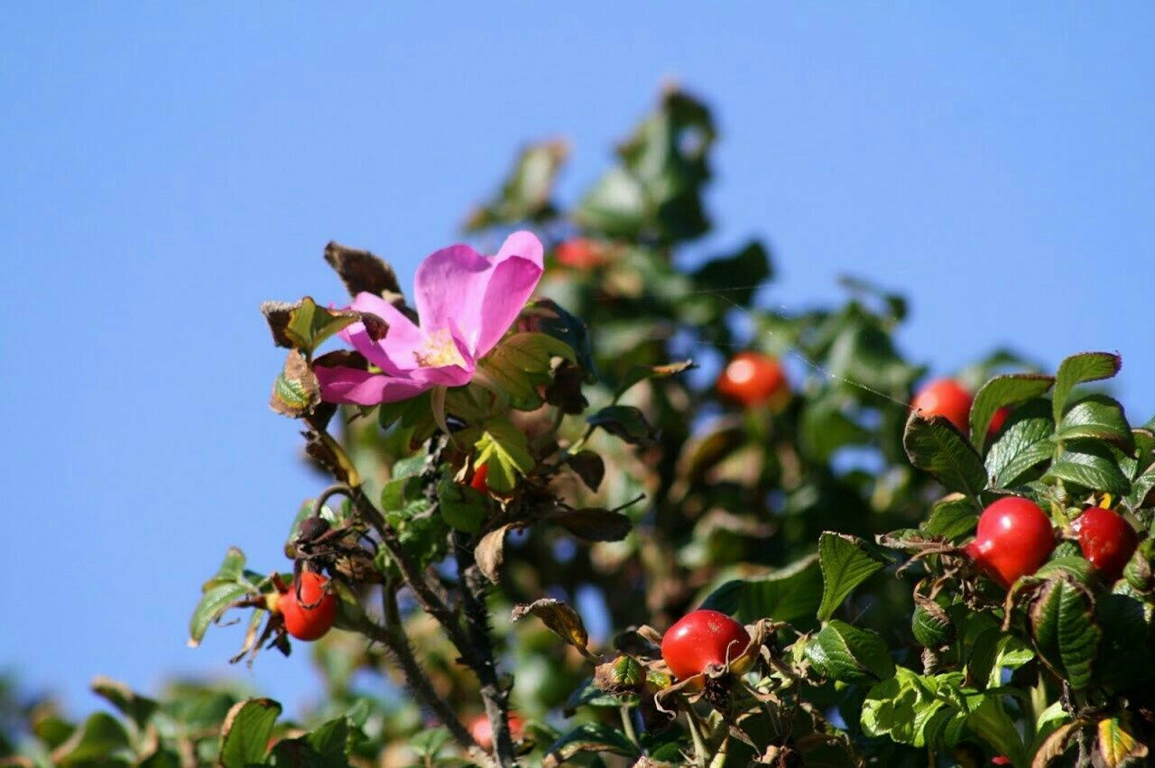 Nature Flower Springtime Botany Tadaa Community Enjoying Life Dk2015 EyeEm Nature Lover
