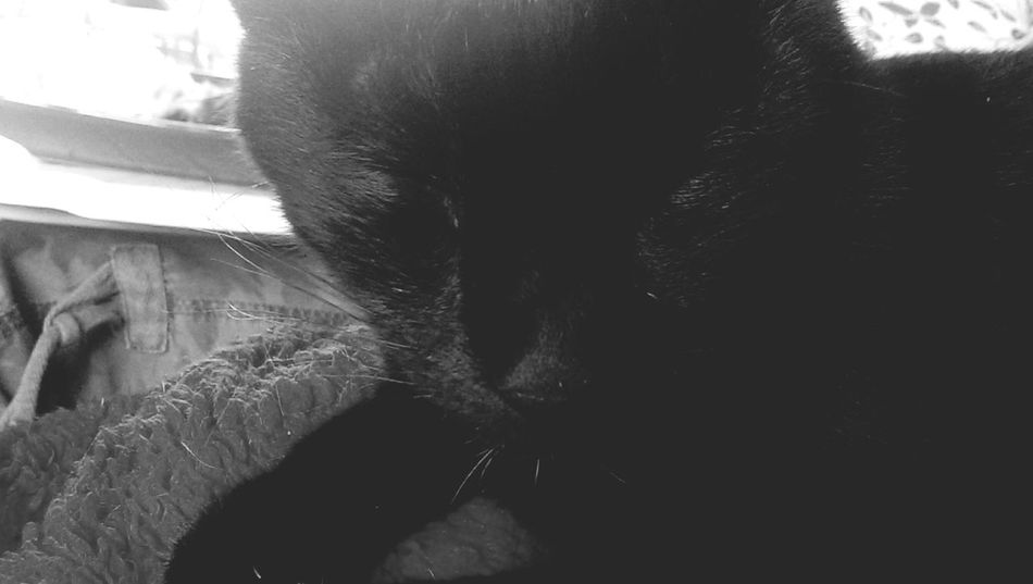 Cat Squeaky Black And White