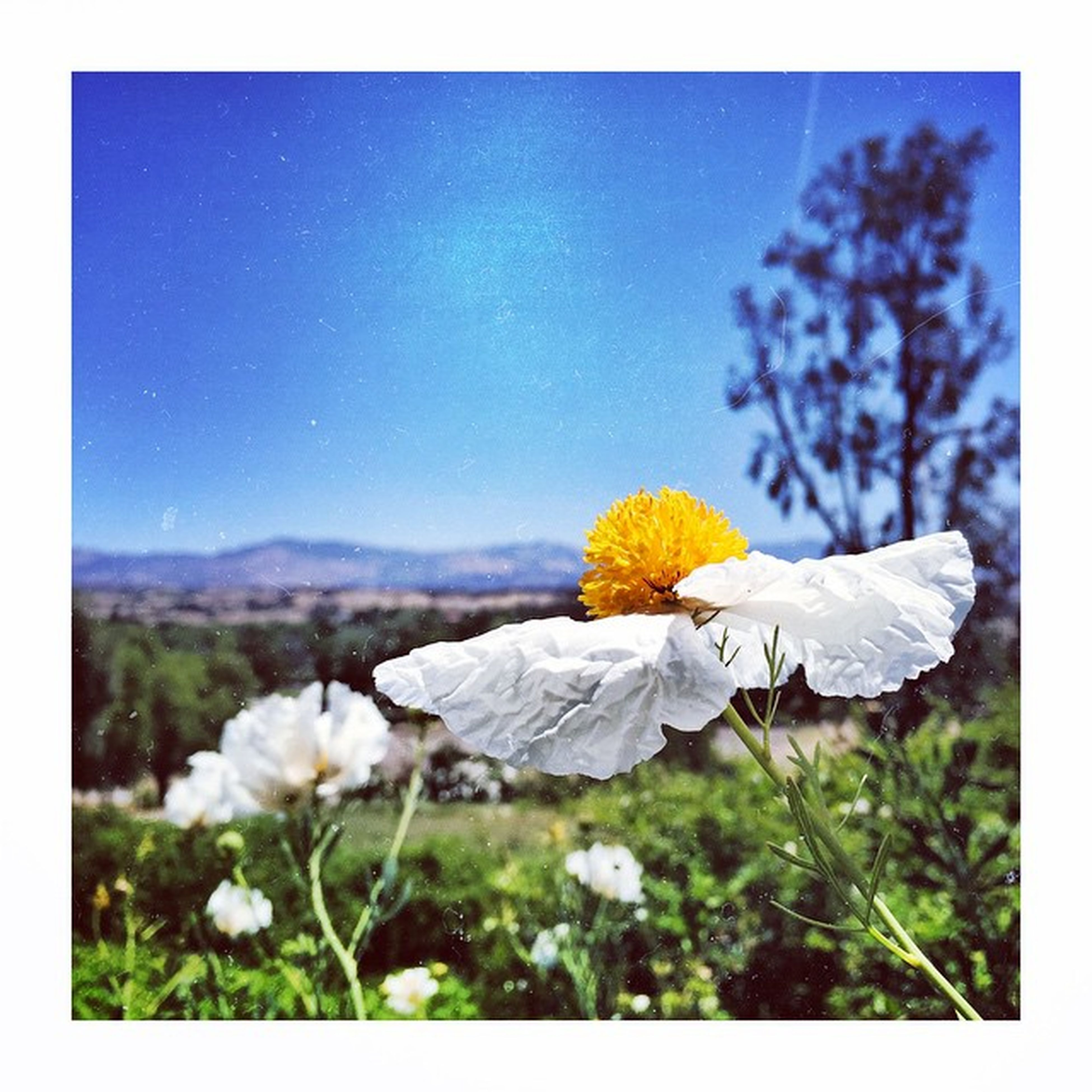 Enjoying my Sunday off in the beautiful Santaynezvalley Flower