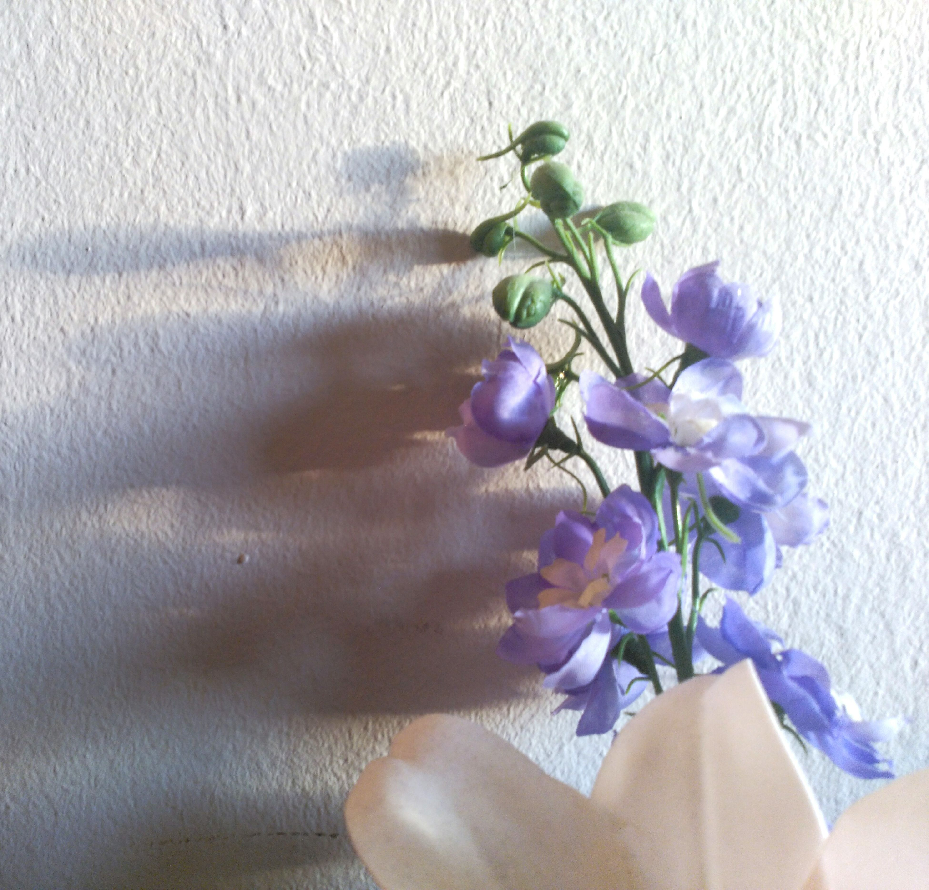 flower, nature, fragility, purple, freshness, plant, flower head, indoors, beauty in nature, day, close-up, no people