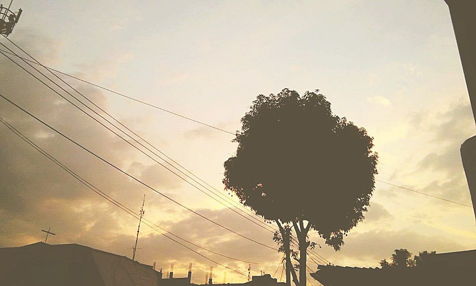 Nature sky tree cloud - sky nature sunset growth no people beauty in nature outdoors day First Eyeem Photo