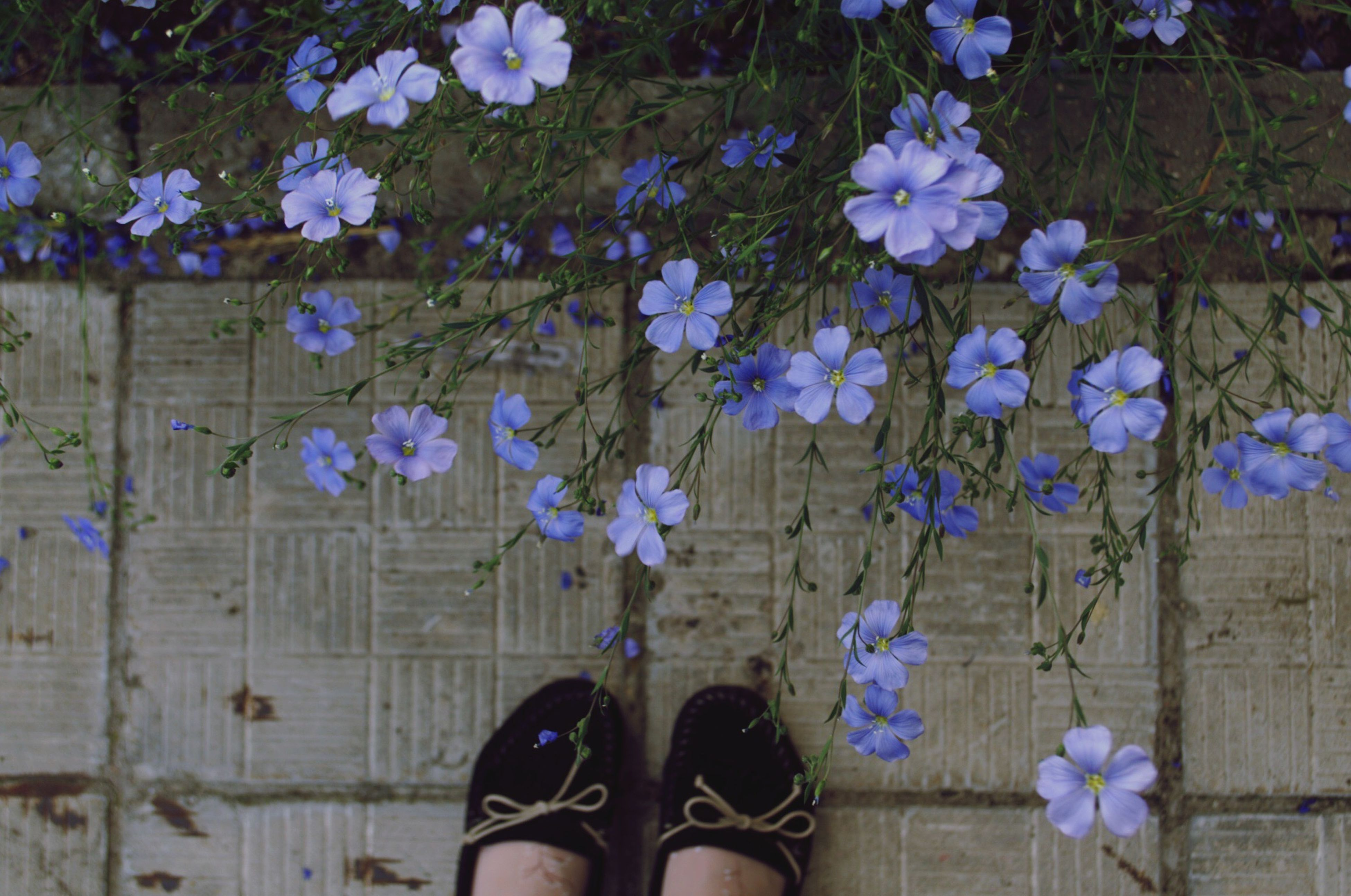 flower, wood - material, low section, shoe, plant, leaf, blue, growth, person, wooden, fragility, one person, plank, purple, nature, outdoors, high angle view, wood, day, standing
